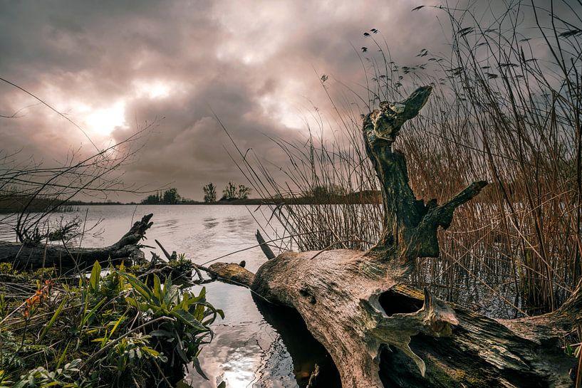 Tronc d'arbre dans une rivière sur Bert-Jan de Wagenaar