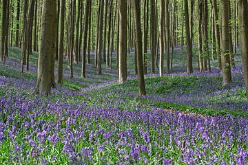 Wilde Hyacinten in het Hallerbos von J.A. van den Ende