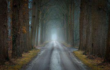 Van herfst naar winter von Patrick Rodink