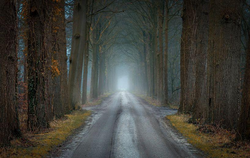 Van herfst naar winter van Patrick Rodink