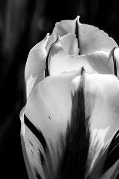 Gestreepte tulp in zwartwit van Leontien van der Willik-de Jonge