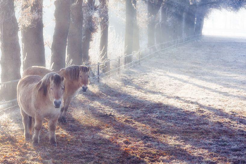 Paarden in de winter in de wei in de mist van Bas Meelker
