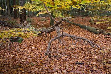 Autum forest van Kees Lieben