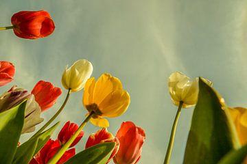 Tulpen van Wolbert Erich