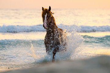 zee paard
