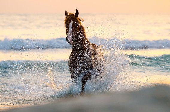 zee paard van Merel Bormans