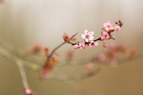 Takje roze bloesem van Marijke van Eijkeren