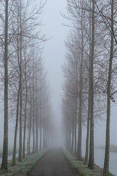 Bomenlaan in de mist van Art_Pics_Lotte | Lotte Photo&Design