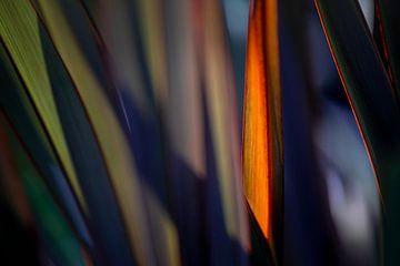 Spicy Lines of Grass van Hiske Boon