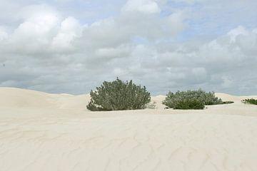Witte woestijn van Inge Hogenbijl