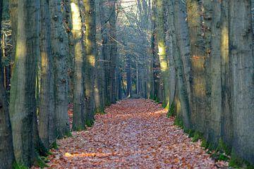 bospad donker bruin bomen van Petra De Jonge