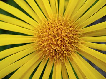 zon bloem van Andrea Meister