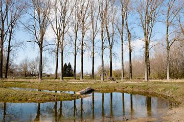 Weerspiegelde bomen - Vroege lente - in Puyenbroeck, Vlaanderen, België van Marie-Lise Van Wassenhove