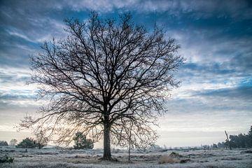 Einsamer Baum von Edwin Werkhoven