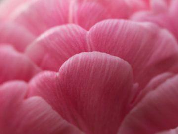 Pink von Wendy Drent