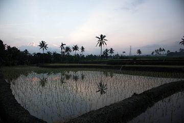 Banyuwangi rijstveld van Wesley Klijnstra