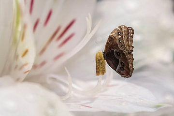 Uil vlinder van Elianne van Turennout