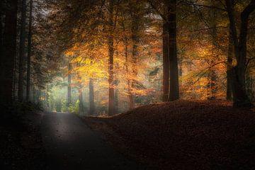 Herbst-Allee von Erwin Stevens