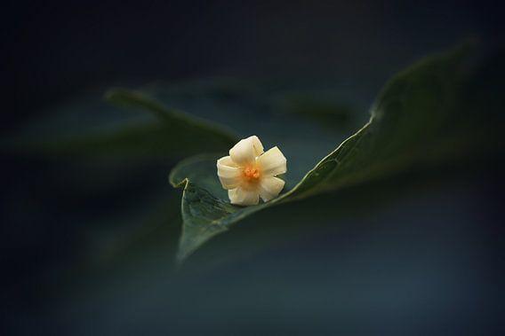 Bloem op blad