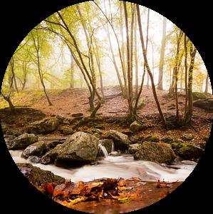 Mistig bos van Jacqueline Lemmens