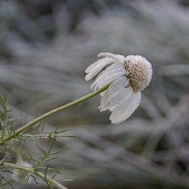 winter is comming van Pieter Heymeijer