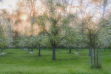 mehrfach belichtete Obstbäume von Tania Perneel