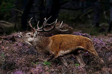 Edelhert mannetje rennend op Veluwe tijdens bronsttijd  van
