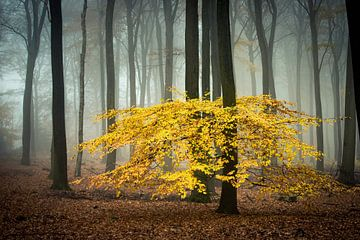 Mistig herfst bos van Peter Haastrecht, van