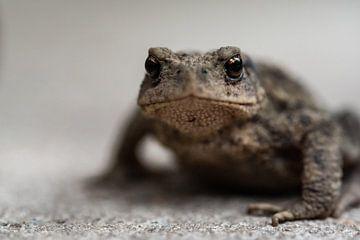 Frosch von Eerensfotografie Renate Eerens