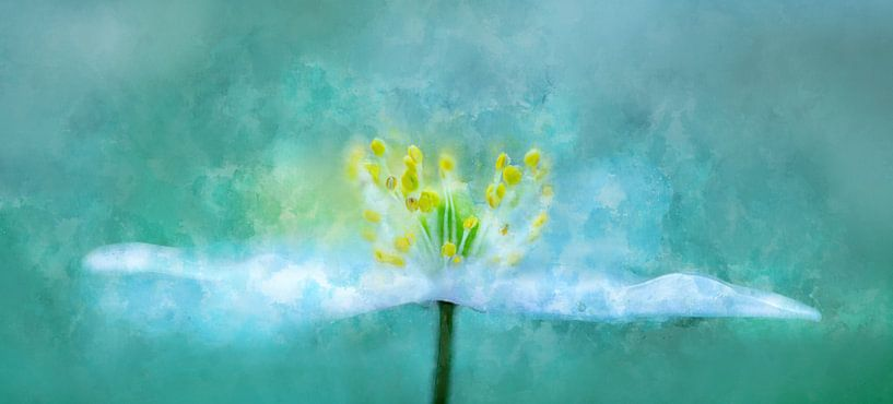 Bloemen 2 van Silvia Creemers