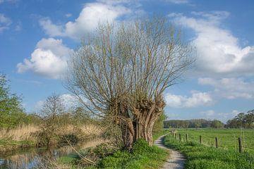 Landschap aan de Nederrijn van Peter Eckert