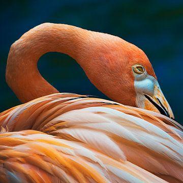 Orange flamingo, oranje vogel