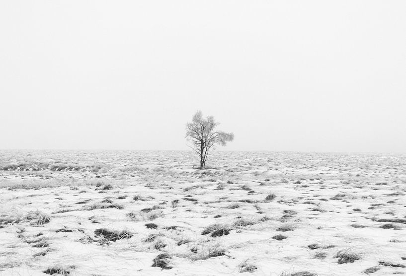 Winter wonderland in de Ardennen  van Lukas De Groodt