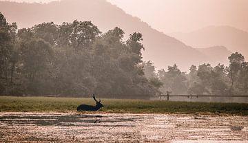 rathambore und sein Hirsch von Fulltime Travels