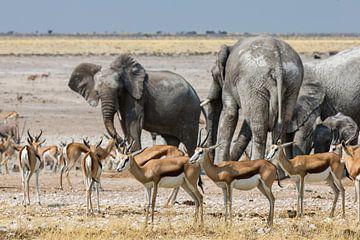 Impala's  en olifanten von Henri Kok