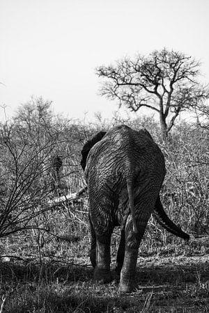 De kont van een olifant