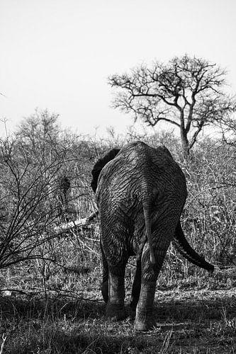 De kont van een olifant van Lizanne van Spanje