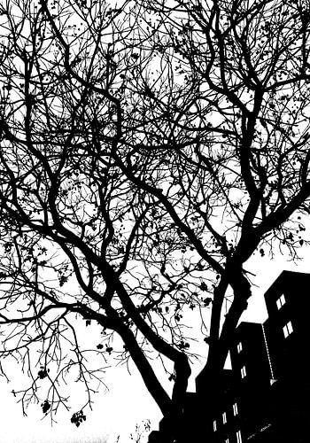 kale boom van