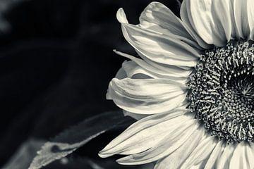 Grote zonnebloem van Kirsten Warner
