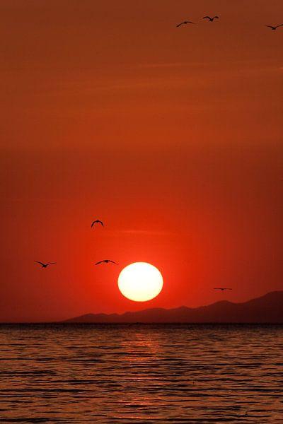 sunset van Paul Jespers