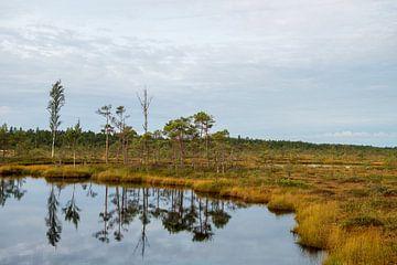 Naturpark Soomaa in Estland von Ellis Peeters