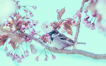 Der Spatz zwischen den Kirschblüten Nr. 2 von Alex Hamstra