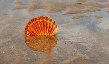 schelp op het strand van Corrie Ruijer