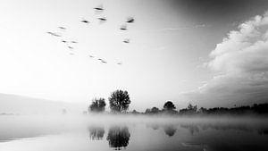 Birds flying by