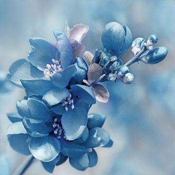 Blau  sur Violetta Honkisz