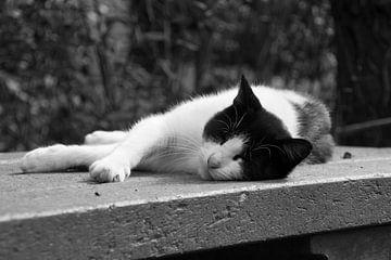 Kat zwartwit von Angelique van Heertum
