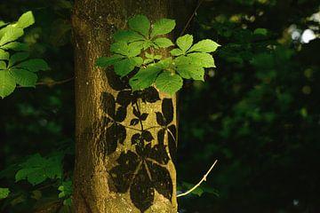 schaduw blad op boom van Petra De Jonge