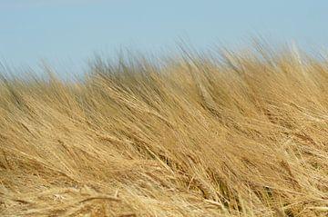 De oogst voor de nazomer. van Grietje van der Reijnst-Brak