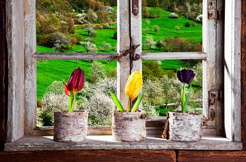 Boerderij salon, tulpen op de vensterbank, tulpen op de vensterbank van Jürgen Wiesler