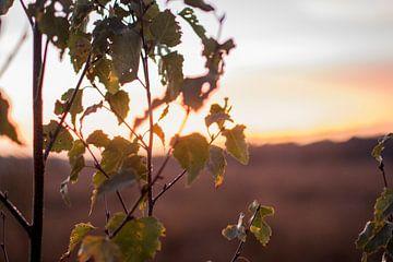 blaadjes in de zon von daan van den heuvel